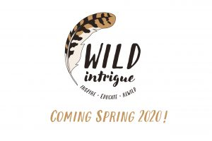 HW hide wild intrigue place