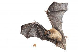 WH bats